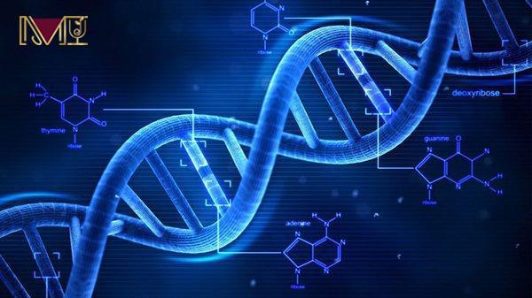 Sesamol bảo vệ ADN khỏi các tác nhân phóng xạ