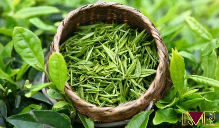 Trà xanh có chất catechin giúp hỗ trợ chức năng gan